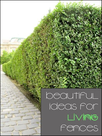 High Quality Find This Pin And More On Living Fence Ideas.