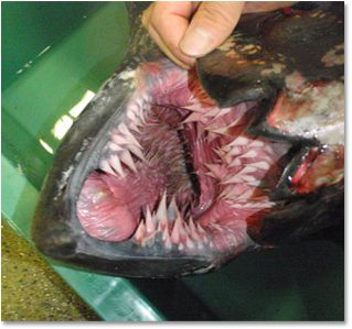The 7 Most Terrifying Mouths in Nature