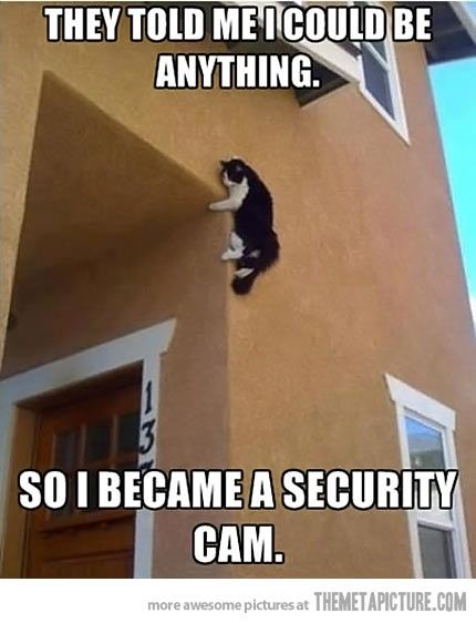 Kitty Cam…