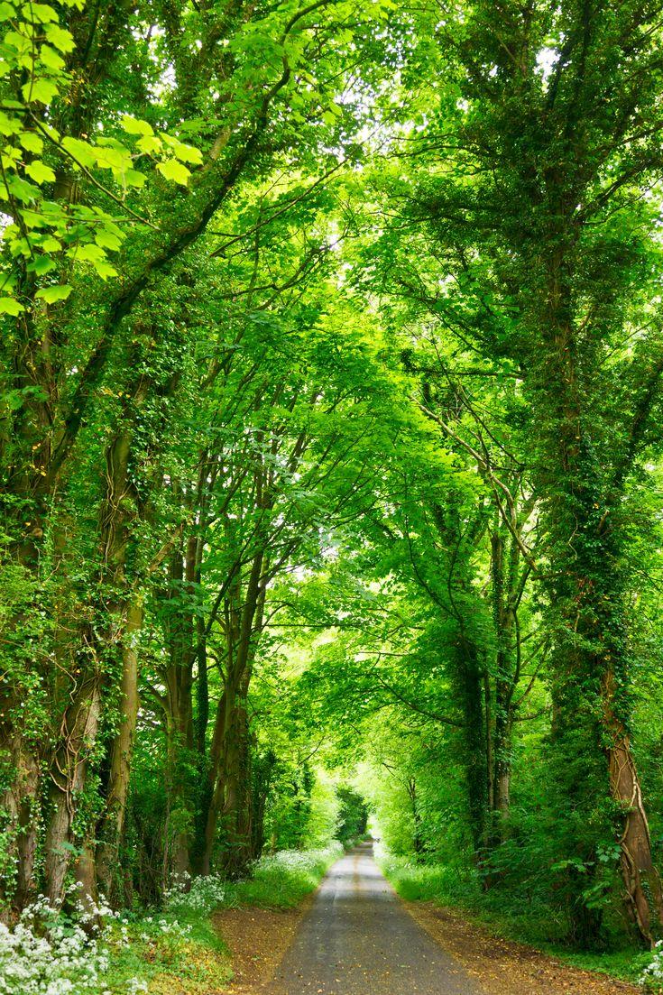 #hd wallpaper narrow road lined