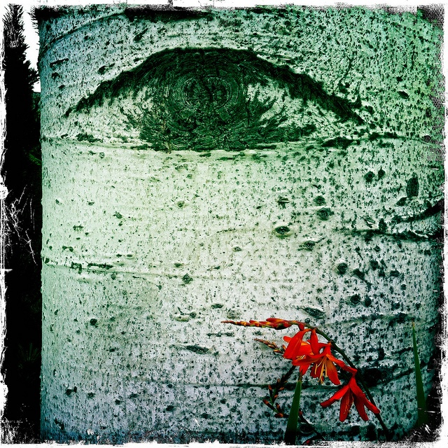 Beauty is in the eye of the beholder by GingerOpp, via Flickr