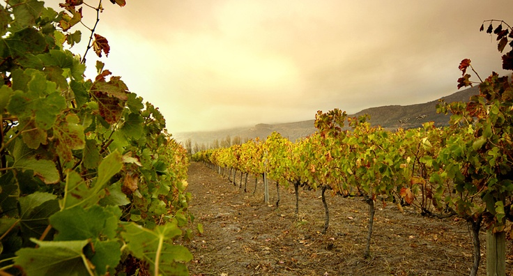 #Steenberg Vineyard     http://www.steenberg-vineyards.co.za/