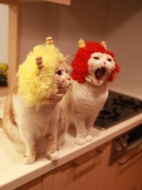猫『ドリフの雷様のコスプレなう』