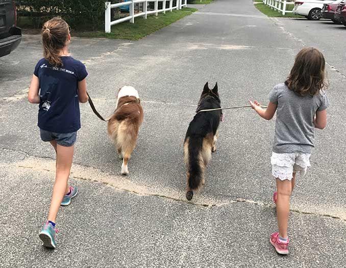 Photo of girls walking dogs in Cambridge, Massachusetts