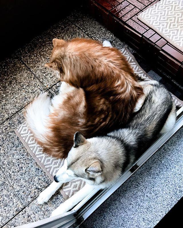 Ich Liebe Meine Kompakten Hunde Hunde Instagram