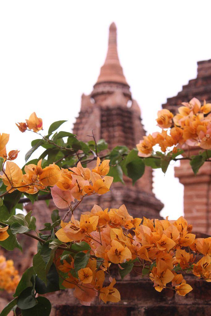 Bagan's temples in Myanmar: spectacular!