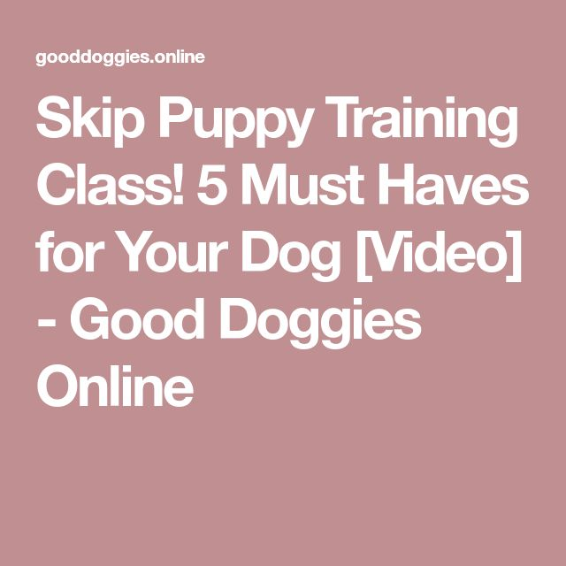 Skip Puppy Training Class! 5 Must Haves for Your Dog [Video] - Good Doggies Online