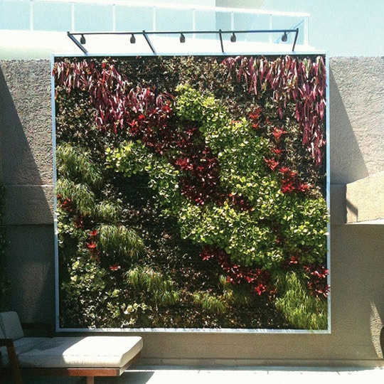 living plant wall, a work of art.