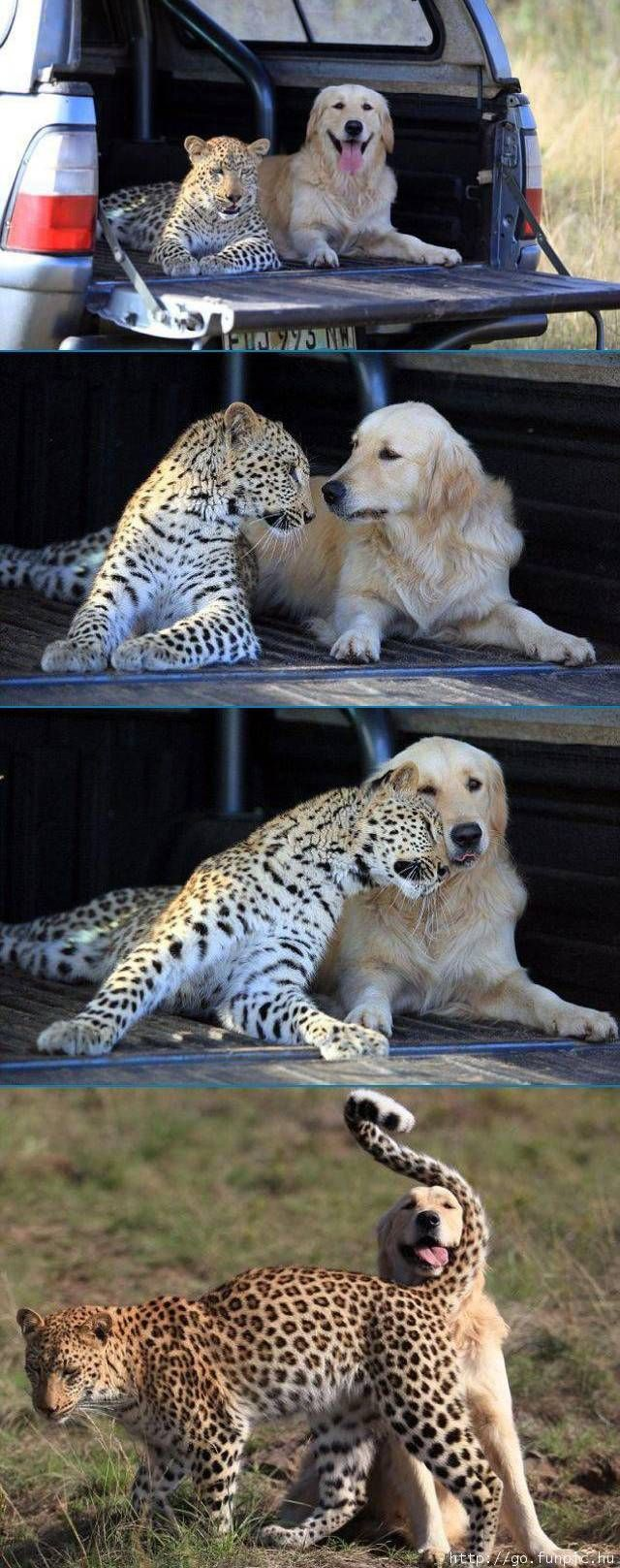 The 10 Most Adorable Animal Friendships.