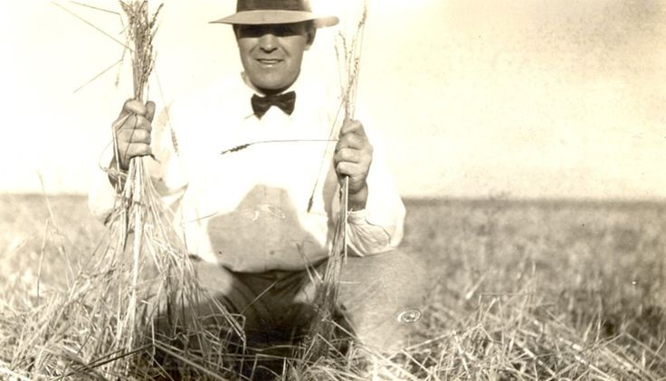Throwback to July 2, 1928! S.K. Bjornson, assistant manager of the hail department in Rawlins County, Kansas, shows off a local wheat crop.