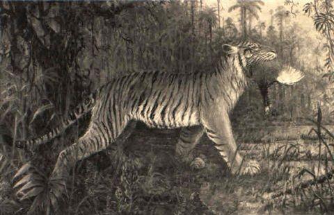 A tiger and its prey by Henri Verstijnen