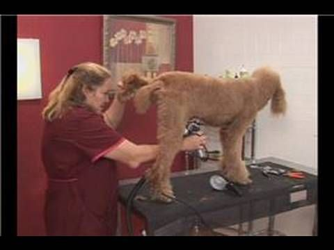 How to Become a Professional Pet Groomer in 5 Steps
