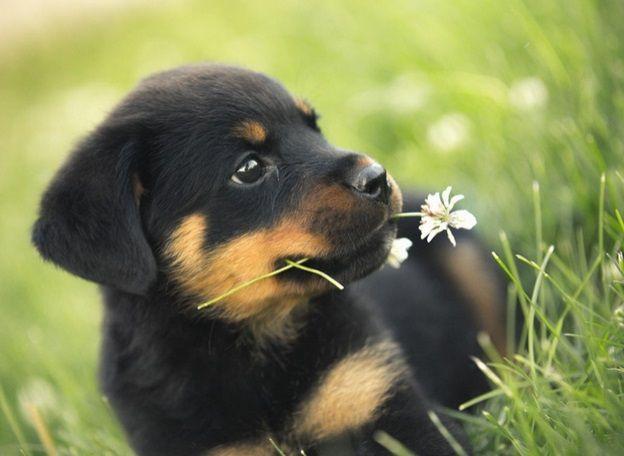 Best Dog Obedience Training Near Me