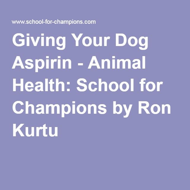 Giving Your Dog Aspirin - Animal Health: School for Champions by Ron Kurtu