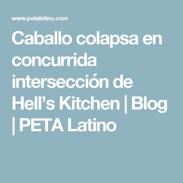 Caballo colapsa en concurrida intersección de Hell's Kitchen | Blog | PETA Latino