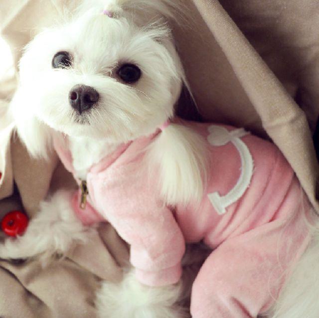 小型犬 服トイプードル 服チワワ 服などの商品 パイル地パーカーつなぎ Georgeの家