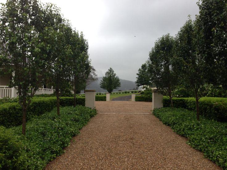 Driveway avenue, Pyrus calleryanna 'Bradford', Trachelospermum jasminoides, Viburnum tinus. Completed in 2010, stage 2 to commence 2014