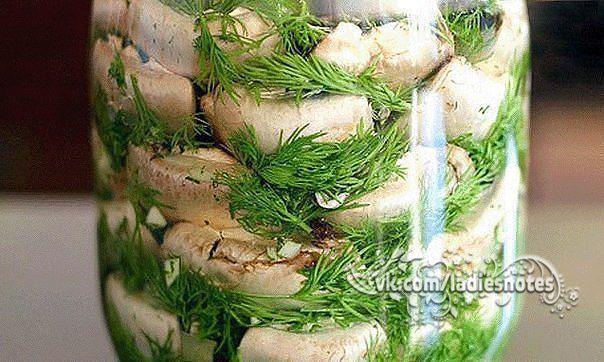 Малосольные шампиньоны - просто объеденье!  Лучше попробовать  рассол  на вкус, 3 ст. Ложки соли на 1л Воды......многовато.