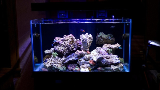 oceanic 57 gallon aquarium with panorama led lights by ecoxotic via flickr tank set ups. Black Bedroom Furniture Sets. Home Design Ideas