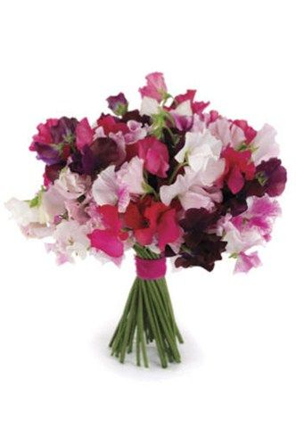 Popular Wedding Flowers » PB Jacksonville Blog sweet peas bouquet bridal | All about Real Weddings - Wedding Blog