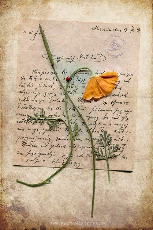 Pressed flowers antique paper