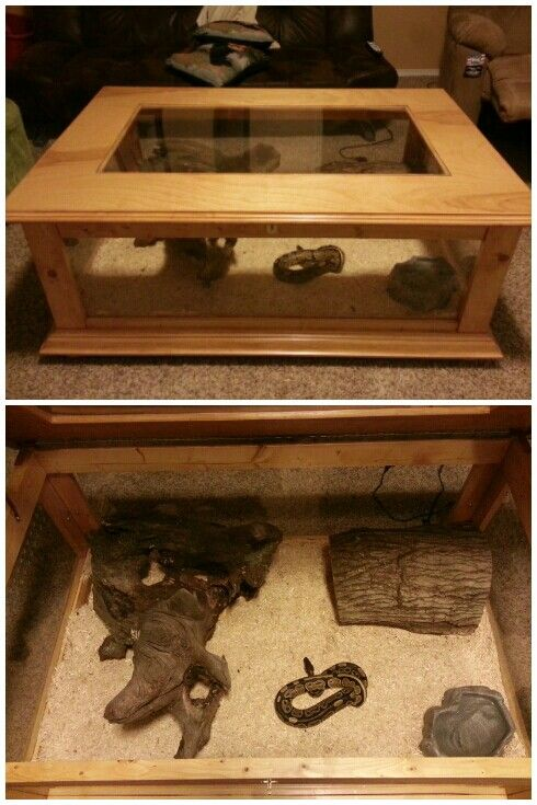 Snake cage coffee table! #crafts #snake #cool