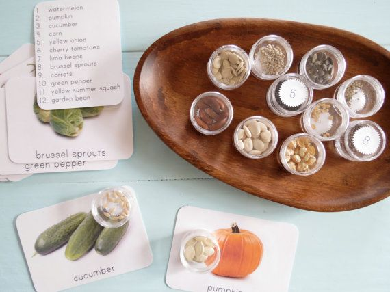 Seed Matching- Montessori Primary Seed Sorting & Matching Set With Picture Cards