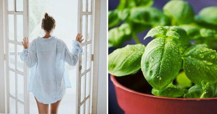 Cómo mantener la casa perfumada: ¡trucos infalibles!