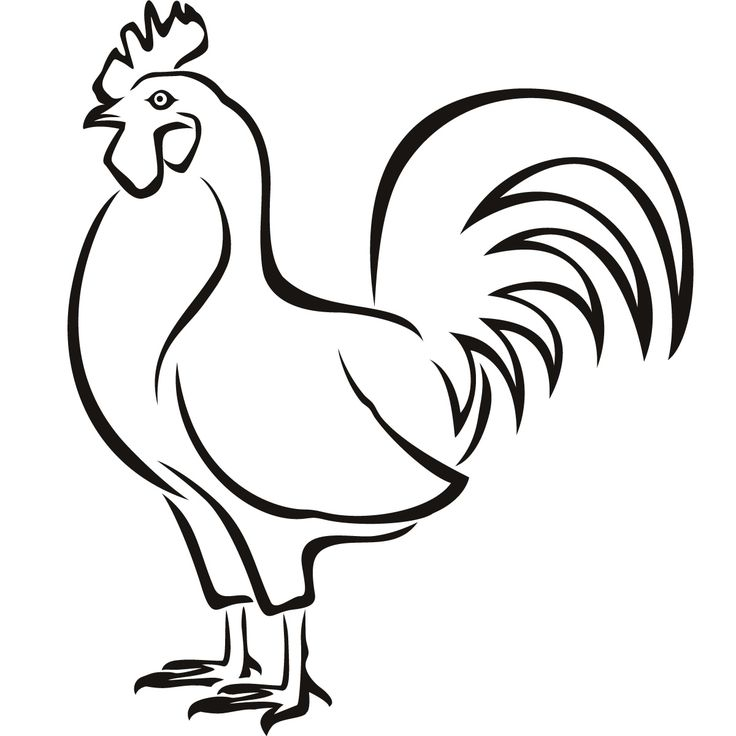 Line Drawing Rooster : Details about chicken hen birds wall art decals