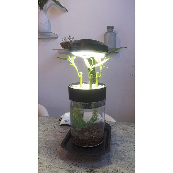 1000 images about fish tanks on pinterest the plant for Betta fish aquaponics