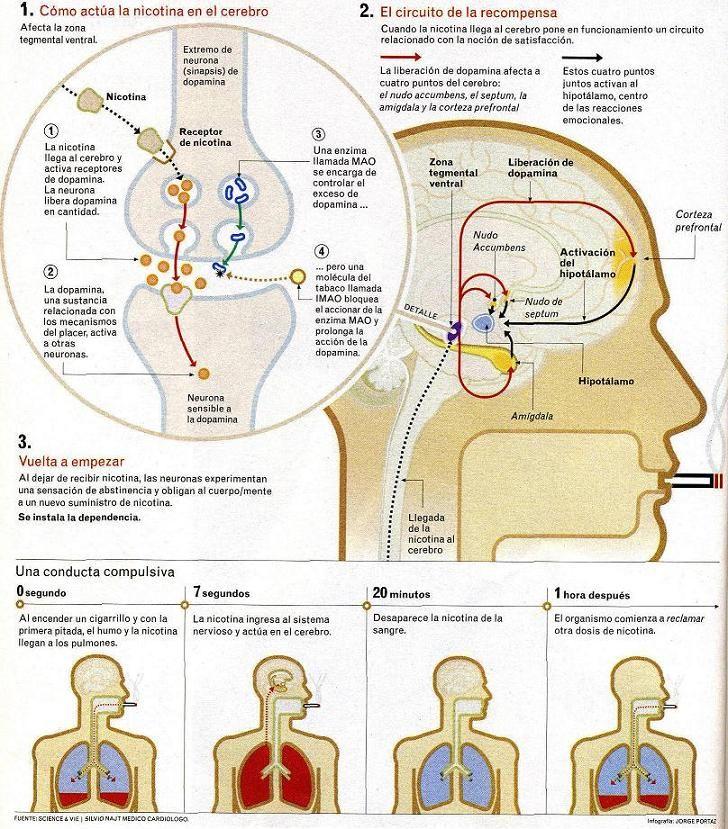 El efecto de la nicotina en nuestro cuerpo