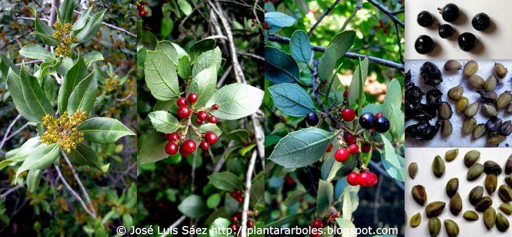M s de 1000 ideas sobre arbustos en pinterest plantaci n for Arboles y arbustos de jardin