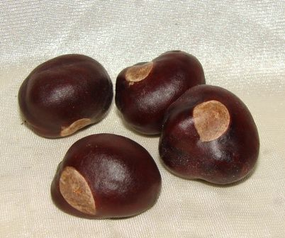 Buckeye Nuts are carried in some mojo bags to cure or prevent such things as arthritis, rheumatism and migraines.  It's also been used to bring good fortune to gamblers.