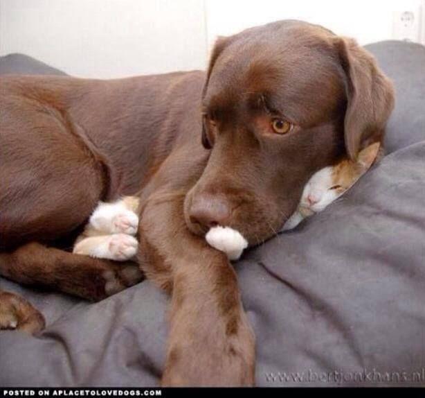 Cat? What cat?
