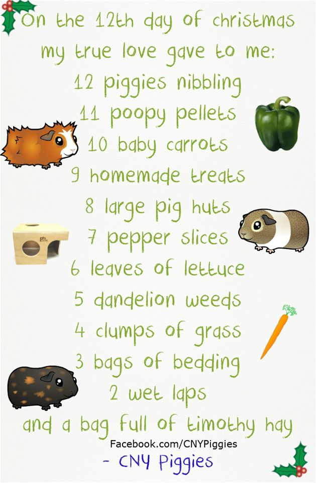This is so cute! I'm going to memorize and sing this to my guinea pigs when Christmas rolls around again!
