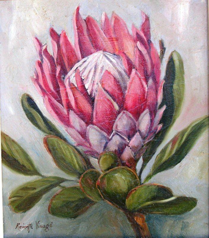 Protea …