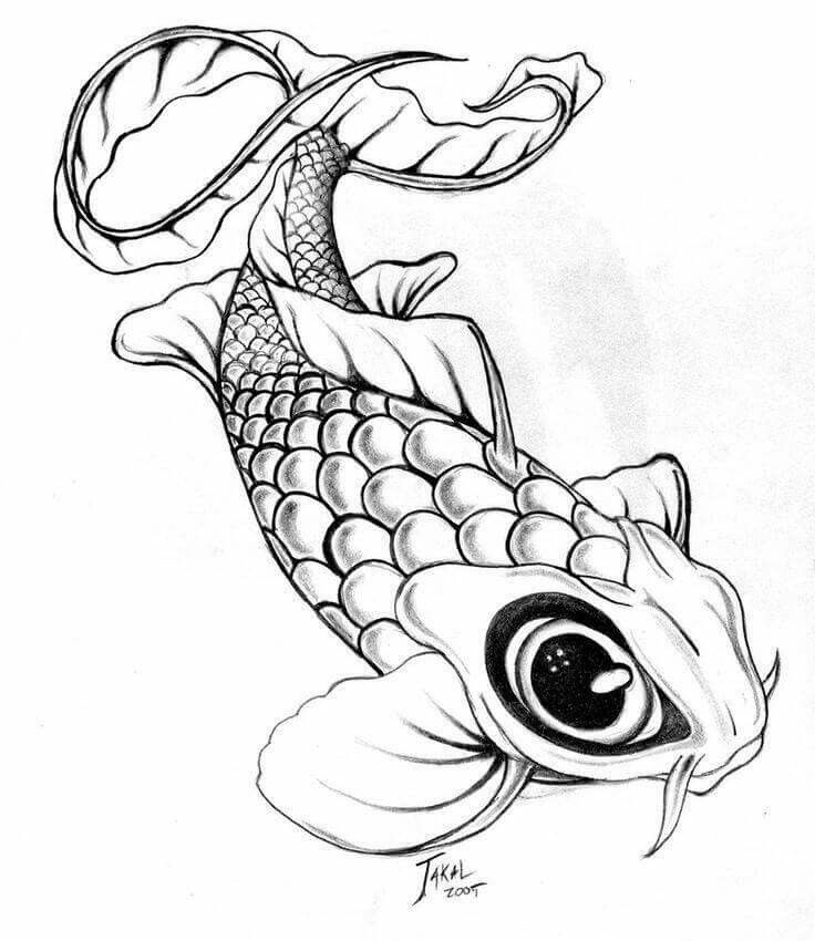 9 best ryby ky images on pinterest koi fish drawing for Coy fish drawing