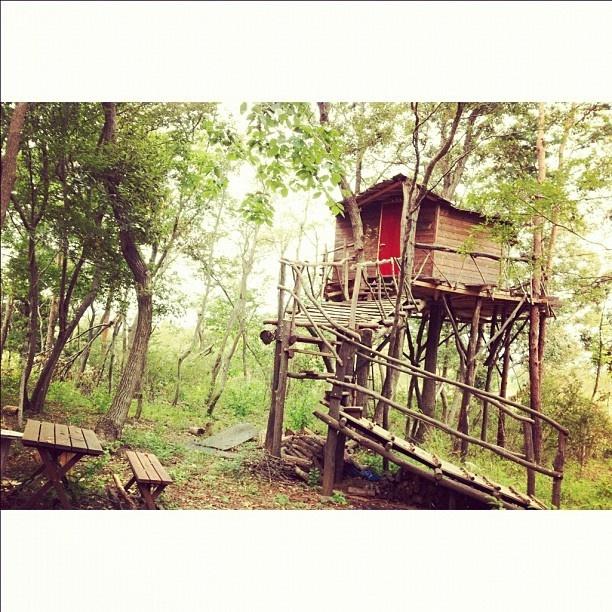 @yuko_t | Tree house #treehouse #forest #woods #green #nature #holyday #fairytale | Webstagram (ウェブスタグラム) - インスタグラムをパソコンで見れるサービス