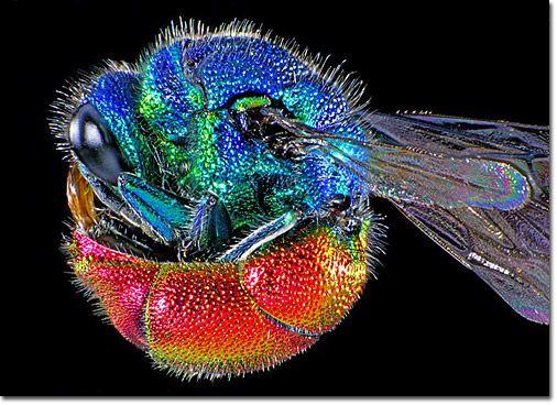 vida microscopica ciencia y arte - Buscar con Google