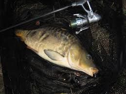 Dave Pickering RI's Carp Blogger catches a lot of Big Carp on Okuma Baitfeeder