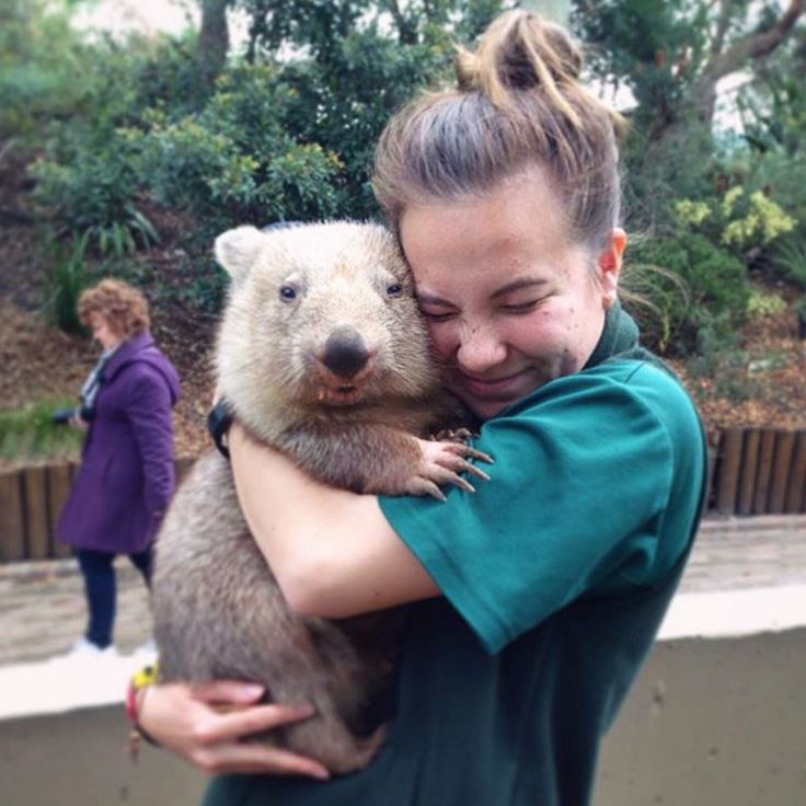 Sometimes all you need is a hug! Taronga volunteer keeper @domarndt91 (Instagram) stopped to say hello to Chloe the Wombat while cleaning outside our Platypus House.
