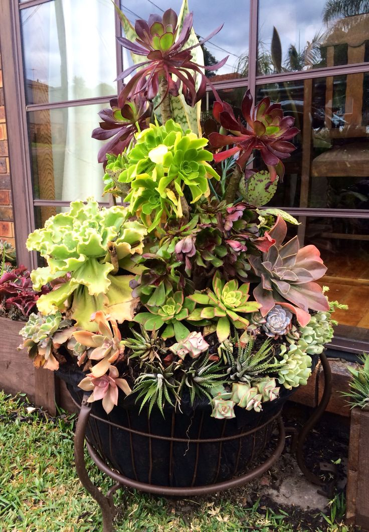 26 Best For The Love Of Succulents The Living Wall
