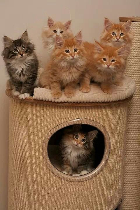 Kittens... - wow the one in the hole is exactly like my little Tabitha