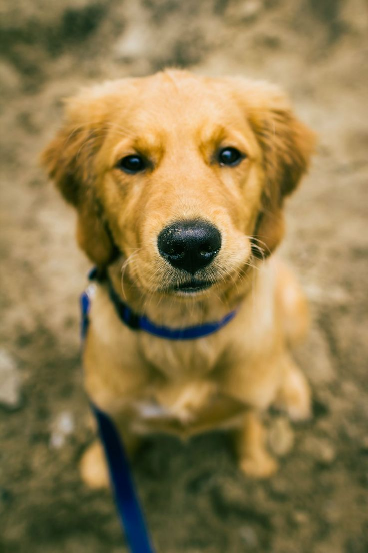 best animals images on pinterest dogs puppy love and th