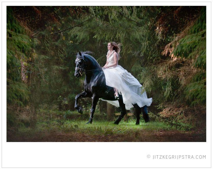 Het Friese Paard Friesian Horse with Bride