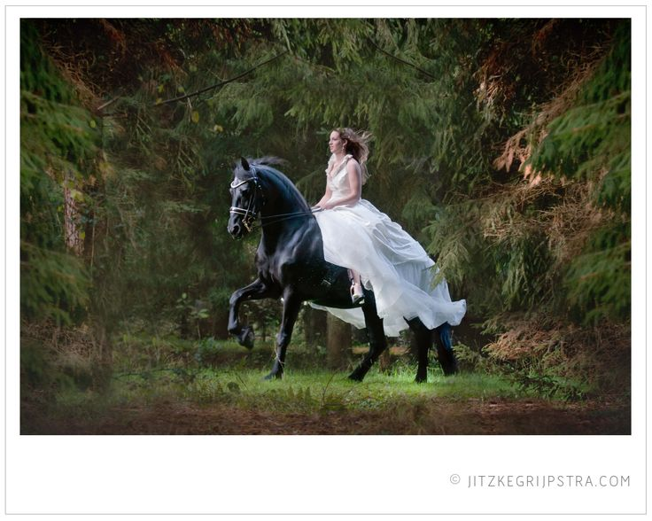 Het Friese Paard Friesian Horse with Bride