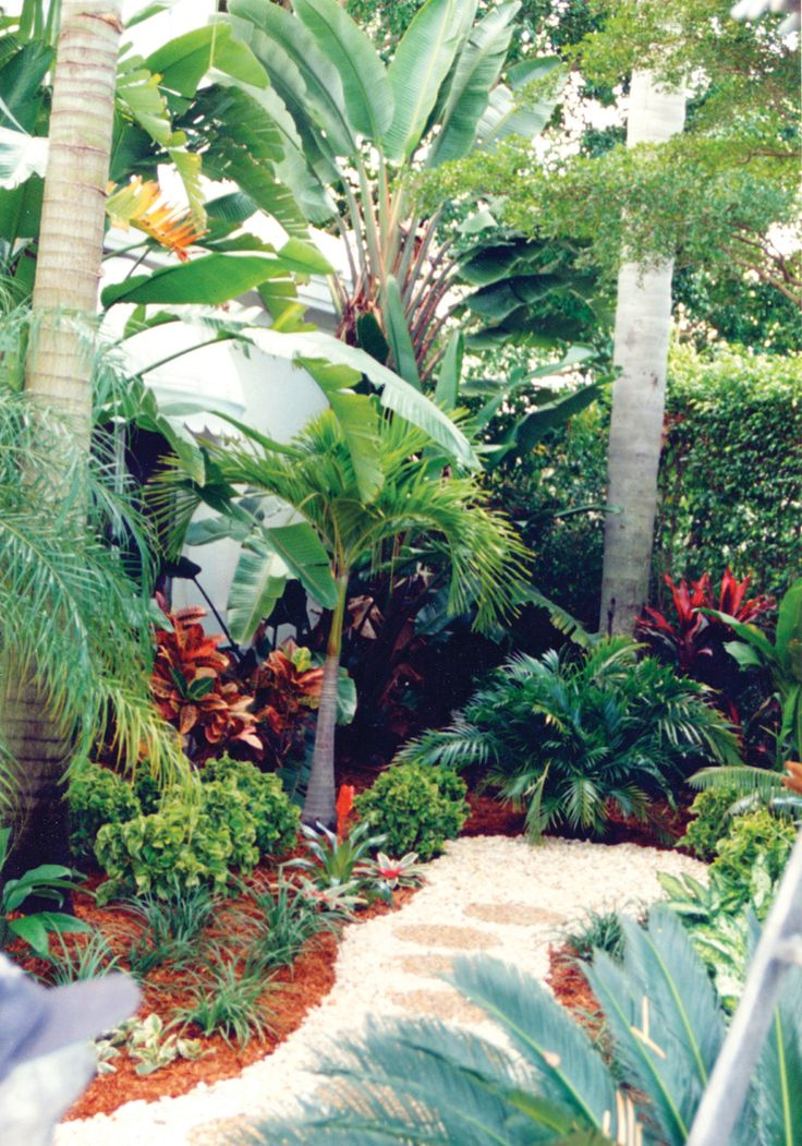 This Palm Beach county garden features different shades of green, coupled with textural differences, to form a tropical landscape. See more south Florida landscapes at www.pamela-crawford.com. Servicing all of Palm Beach county, including Boca Raton, Delray Beach, Wellington, town of Palm Beach, Palm Beach Gardens, and Jupiter.