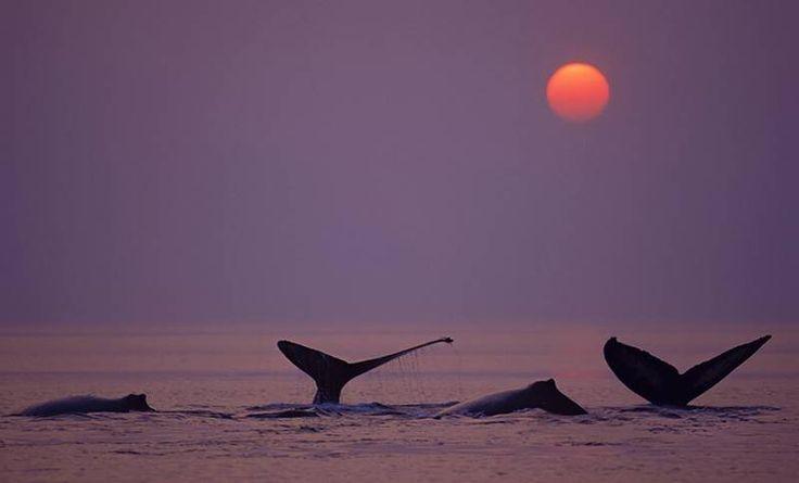 ballenas del sur argentino Península de Valdez Argentina