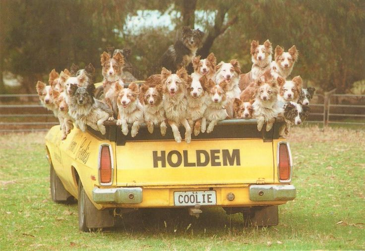 Back of the Holden Ute - Where else but Australia.
