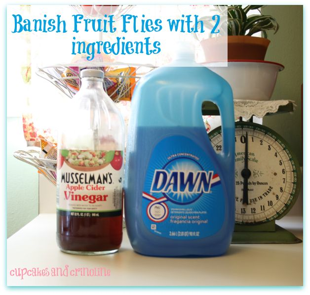 Nobody like fruit flies. Here is a recipe to take them away without chemicals..